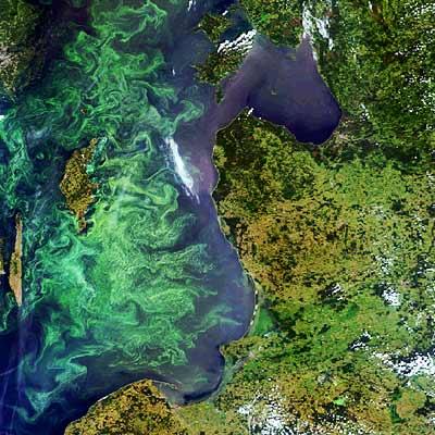 Vodní květ zamořující Baltské moře. Pohled ze satelitu.